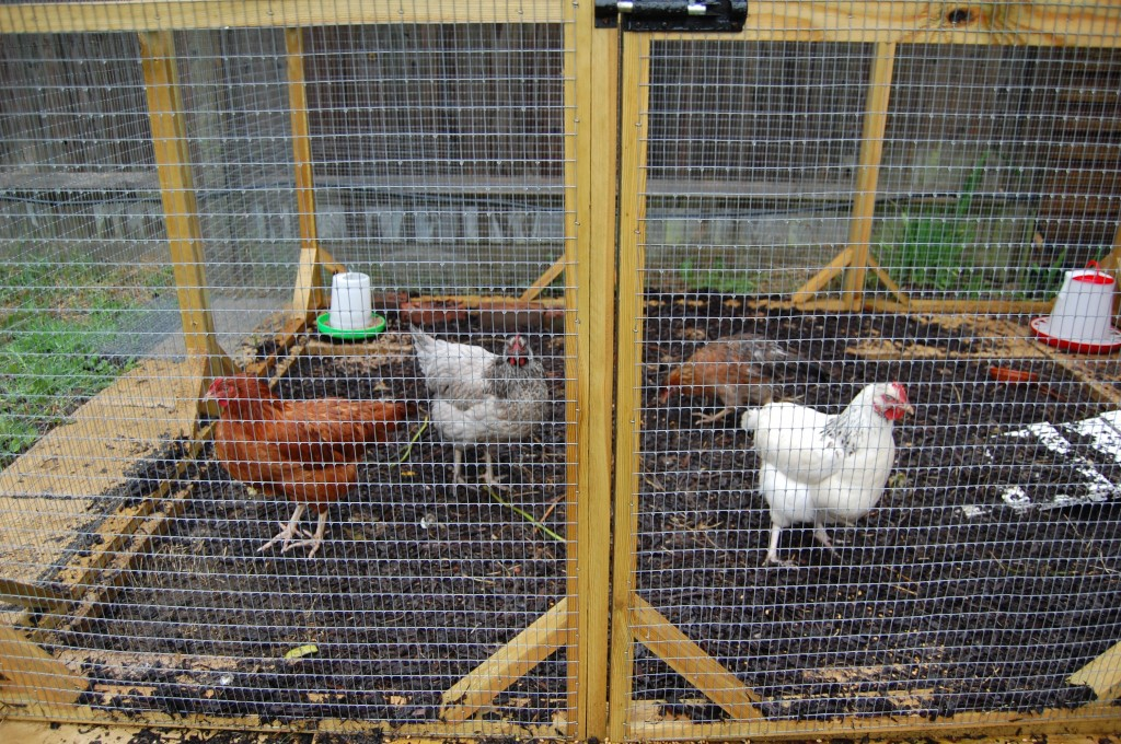The chicken pen with the new bark surface