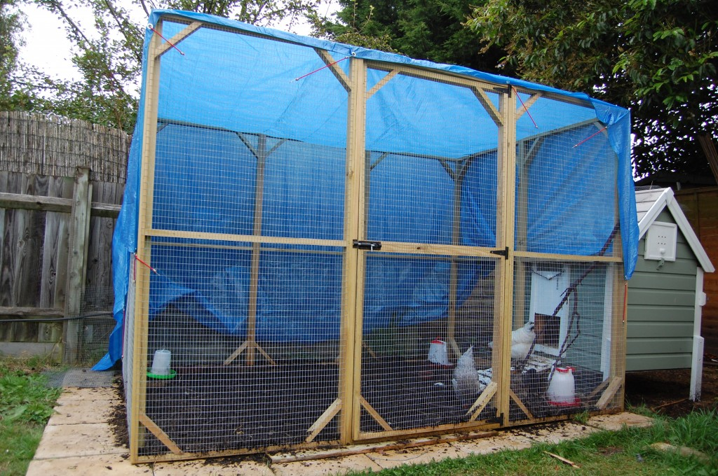 A blue tarpaulin serving as a makeshift roof for the chicken pen