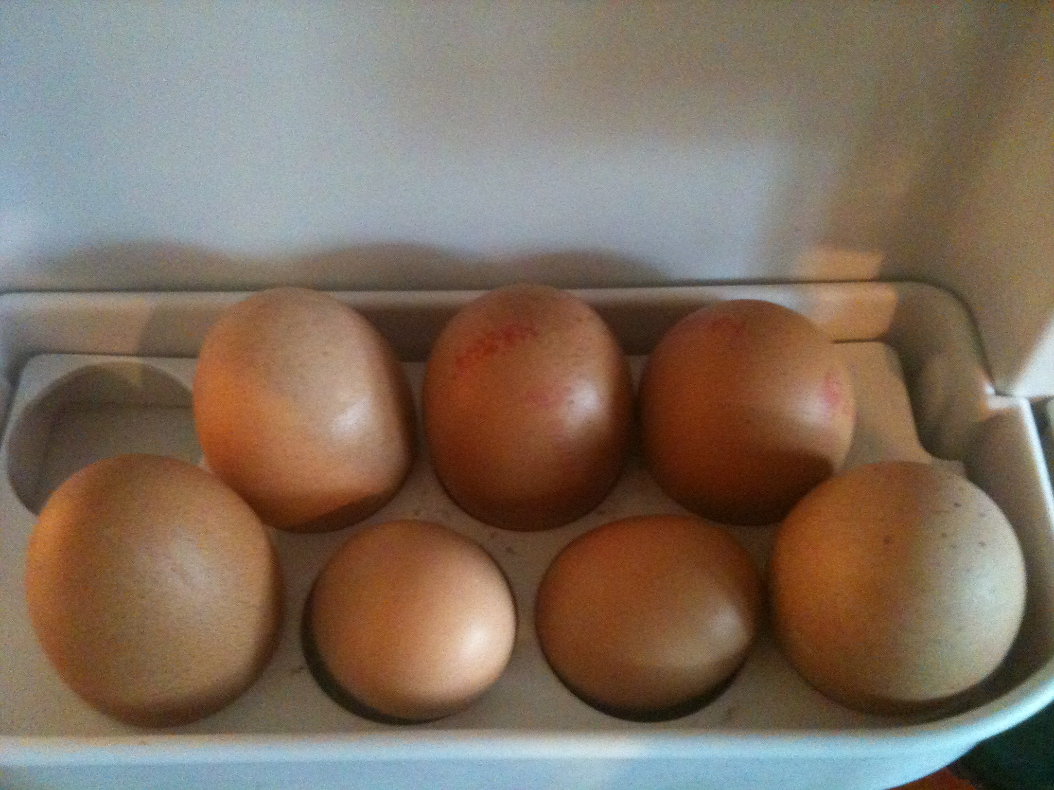 Pearl's eggs surrounded by shop-bought ones in the fridge