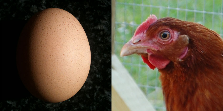 Queenie's pale, faintly speckly egg