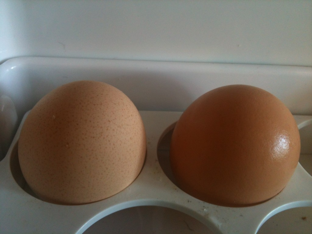 The two eggs found side by side in the hen house